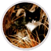 Cat In The Golden Grass Round Beach Towel