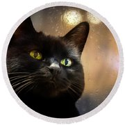 Cat In The Window Round Beach Towel