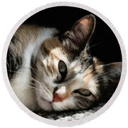 Cat Napping In The Sun By David Perry Round Beach Towel
