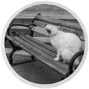 Cat On A Bench Round Beach Towel