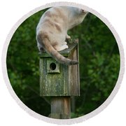 Cat Perched On A Bird House Round Beach Towel