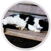 Cat Sleeping On Bench Round Beach Towel