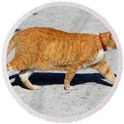 Cat Walk Round Beach Towel