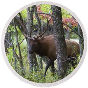 Cataloochee Bull Elk Round Beach Towel
