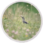 Catbird In The Wildflowers Round Beach Towel