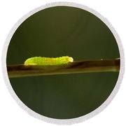 Caterpillar Round Beach Towel