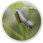 Caterpillar's Spring Green Round Beach Towel