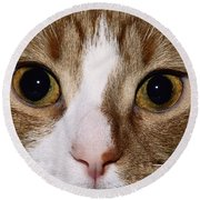 Cats Face Round Beach Towel