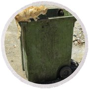 Cats On And In Garbage Container Round Beach Towel