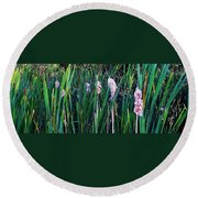 Cattails Round Beach Towel