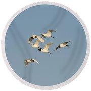 Cattle Egrets Round Beach Towel