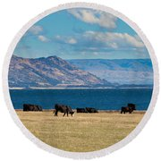 Cattle Grazing At Hawea Lake In Southern Alps In New Zealand Round Beach Towel