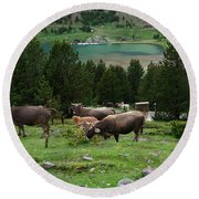 Cattle Grazing In The Pyrenees Round Beach Towel