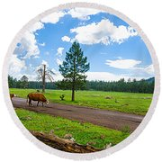 Cattles Roaming Through Hawley Lake Arizona Round Beach Towel