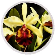 Cattleya Too Round Beach Towel