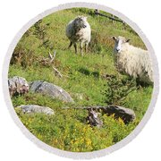 Cautious Sheep In The Pasture Round Beach Towel
