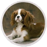 Cavalier King Charles Spaniel Dog Lying Round Beach Towel