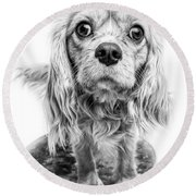 Cavalier King Charles Spaniel Puppy Dog Portrait Round Beach Towel