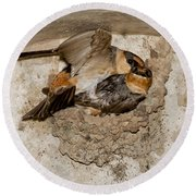 Cave Swallows Round Beach Towel