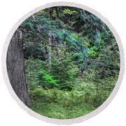Cedar Along The Trail Of Cedars Glacier National Park  Round Beach Towel