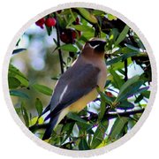 Cedar Waxwing In Tree 030515a Round Beach Towel