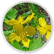 Celandine Poppy Or Wood Poppy - Stylophorum Diphyllum Round Beach Towel