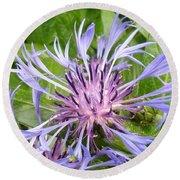Centaurea Montana Blue Flower Round Beach Towel