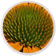 Center  Of Cone Flower Round Beach Towel