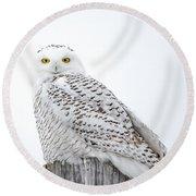 Centered Snowy Owl Round Beach Towel