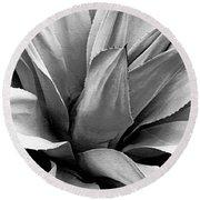 Century Plant I V Round Beach Towel