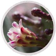 Cereus Hexagonus Pink Round Beach Towel