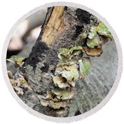 Violet-toothed Polypore Round Beach Towel