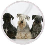 Cesky Terrier Dogs Round Beach Towel