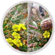 Chafer Beetle On Medusa Succulent In 3d Stereo Round Beach Towel