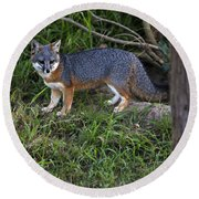 Channel Island Fox Round Beach Towel
