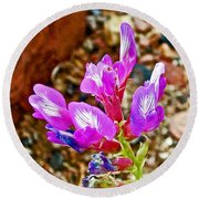 Chaparral Pea In Painted Desert Of Petrified Forest National Park-arizona  Round Beach Towel