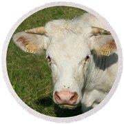 Charolais Cow Round Beach Towel