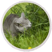 Chartreux Cat And Grass Round Beach Towel