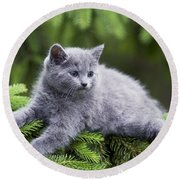 Chartreux Kitten Round Beach Towel