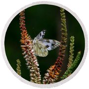 Checkered White On An Indigo Round Beach Towel