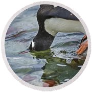 Checking For Orca... Round Beach Towel