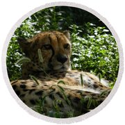 Cheetah 2 Round Beach Towel