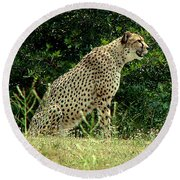 Cheetah-79 Round Beach Towel
