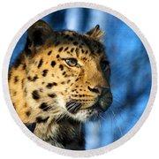 Cheetah Acinonyx Jubatus Round Beach Towel
