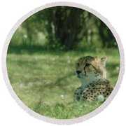 Cheetah At Attention Round Beach Towel