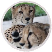 Cheetah Awakening Round Beach Towel
