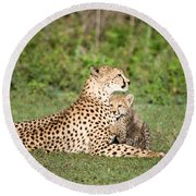 Cheetah Cub Acinonyx Jubatus Playing Round Beach Towel