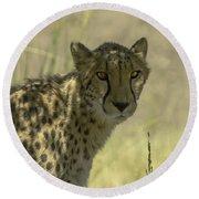 Cheetah Gaze Round Beach Towel
