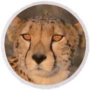 Cheetah Gaze At Sunset Round Beach Towel