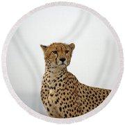 Cheetah In Serengeti. Round Beach Towel